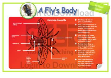 A Fly's Body