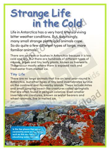 Strange Life in the Cold