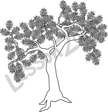 Brown oak tree B&W