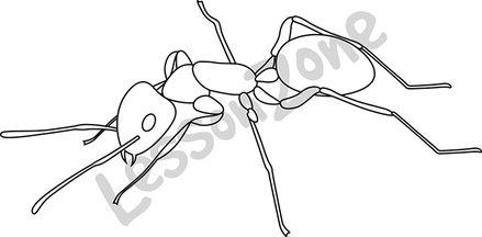 Ant B&W