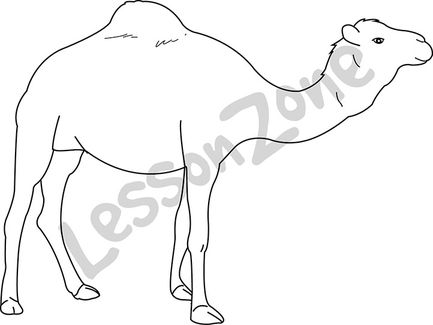 Camel  B&W