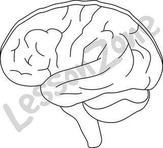 Brain B&W