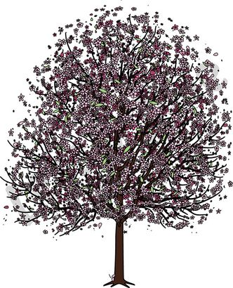 Cherry tree with blossom