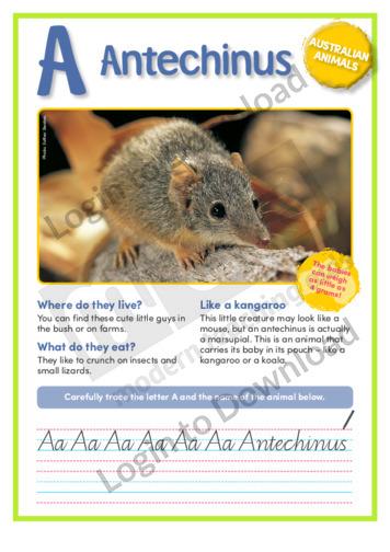 A: Antechinus