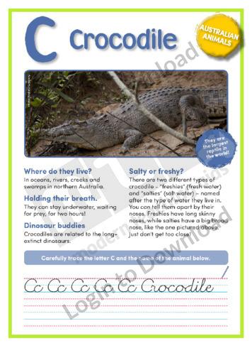 109595E02_AustralianAnimalsCrocodile01