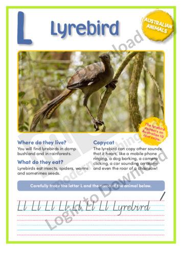 L: Lyrebird
