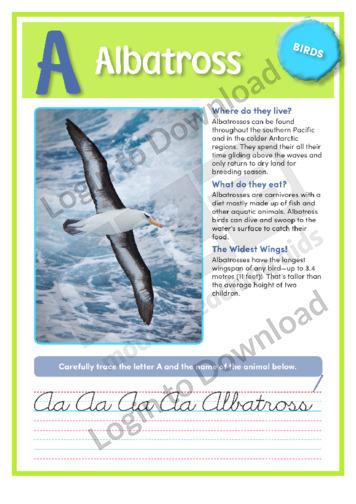 A: Albatross