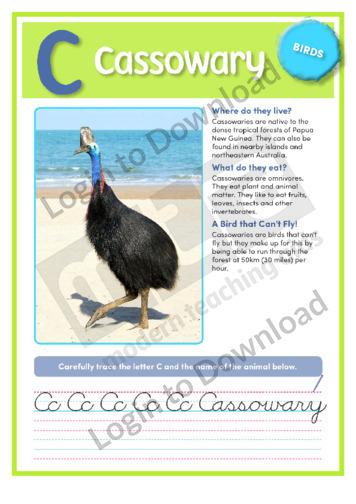 C: Cassowary