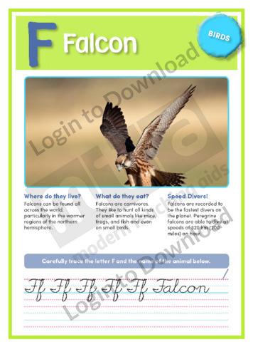 F: Falcon