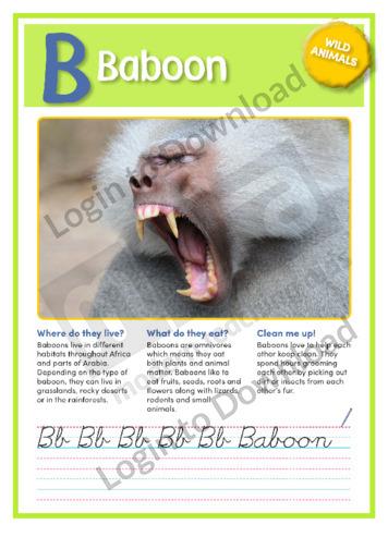 B: Baboon