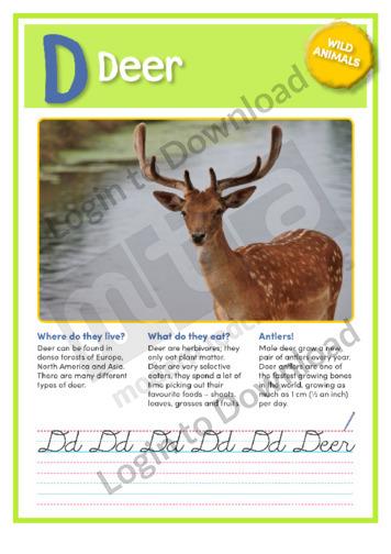 D: Deer