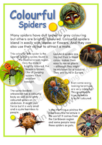 Colourful Spiders