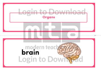 Organs (Landscape 2/page)