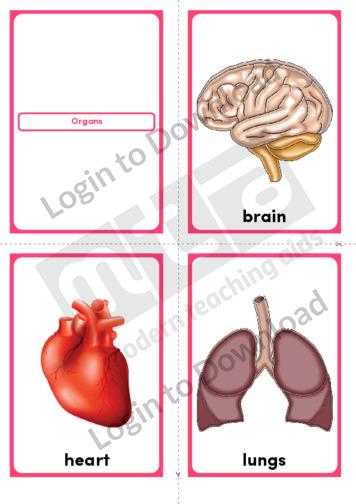 Organs (Portrait 4/page)