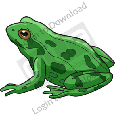 Adult frog