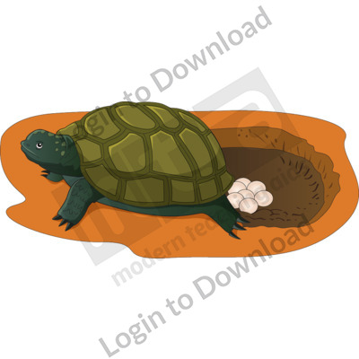 Female turtle laying eggs in hole