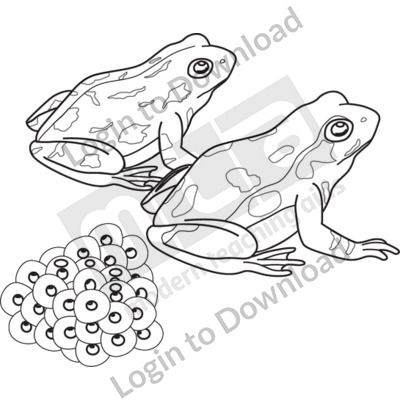 Frogs with eggs B&W