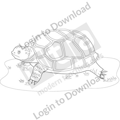 Adult turtle B&W