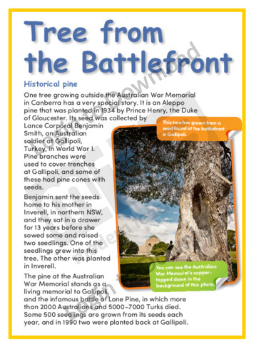 Tree from the Battlefront