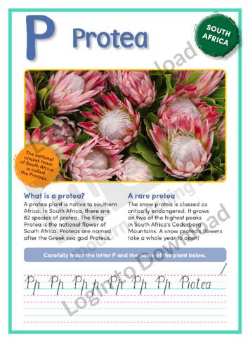 P: Protea
