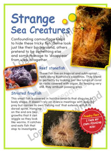 Strange Sea Creatures