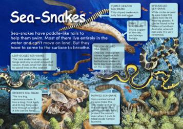 Sea-Snakes
