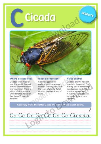 C: Cicada
