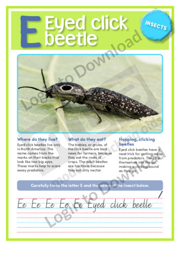 E: Eyed click beetle